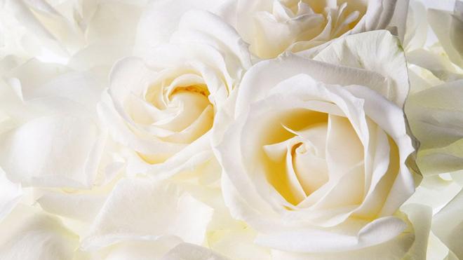 Tác dụng điều trị và bài thuốc chữa bệnh từ hoa hồng