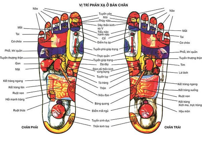 Các huyệt vị ở bàn chân