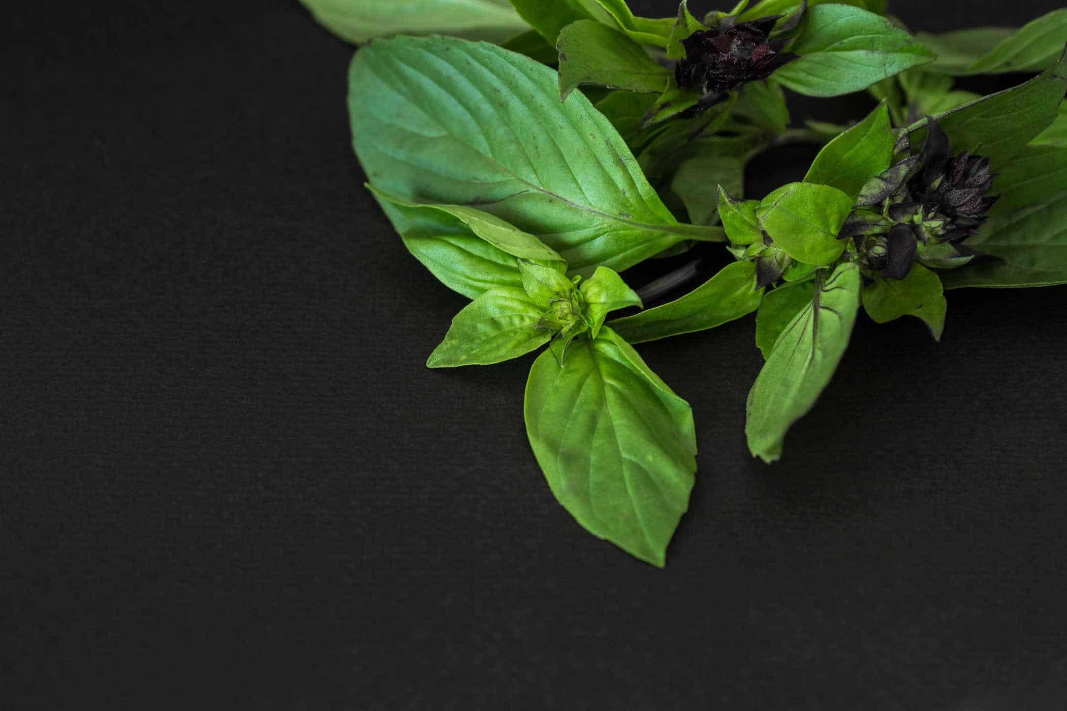 Tác dụng phòng trị bệnh của rau húng quế