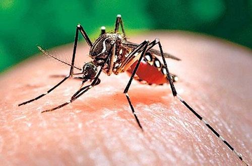 Bệnh sốt xuất huyết nếu được phát hiện và xử lý kịp thời sẽ không gây ra vấn đề gì tới sức khỏe. Tuy nhiên sốt xuất huyết vẫn có thể để lại những hậu quả nghiêm trọng xuất phát từ những nhận thức không đúng của nhiều người.