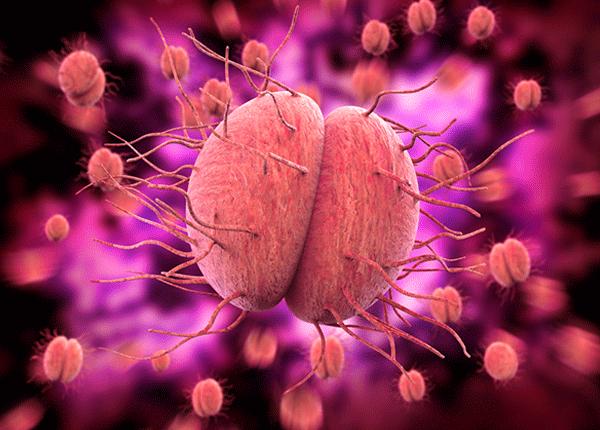 Vi khuẩn gây ra bệnh lậu