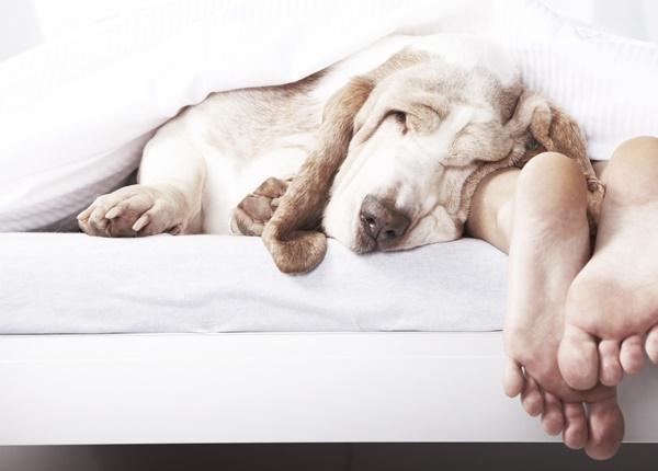 Những điều cần biết về bệnh sán chó