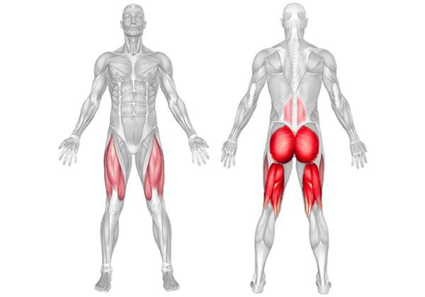 Cơ đùi trước và cơ đùi sau
