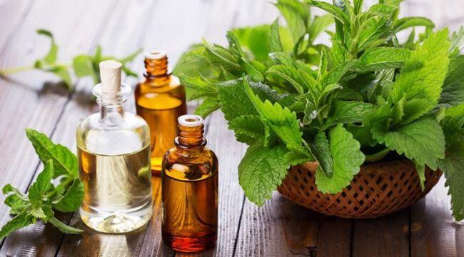 Tác dụng của tinh dầu bạc hà đối với sức khỏe