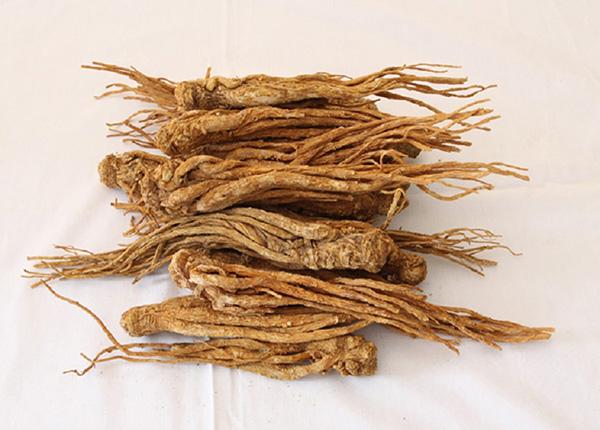 Phần rễ của đương quy sẽ được sử dụng làm vị thuốc chữa bệnh