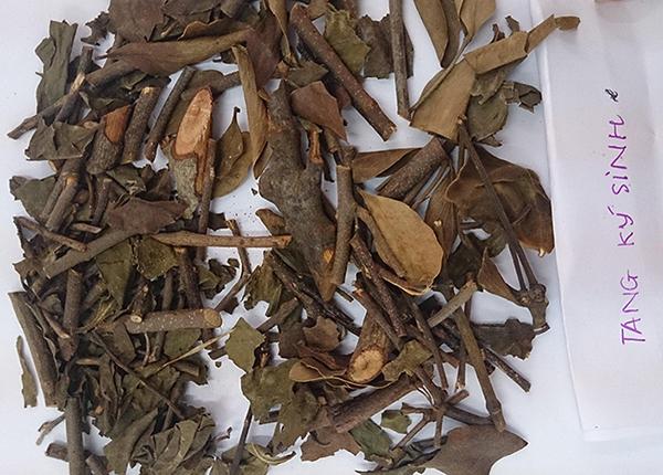 Tang kí sinh phơi khô được sử dụng trong các bài thuốc