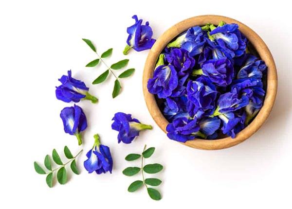 Cây hoa đậu biếc là một loài cây có hoa màu tím đặc trưng